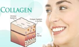 Collagen là gì giahuynhphat.com